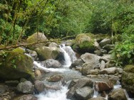 A stream in the headwaters of the Amazon